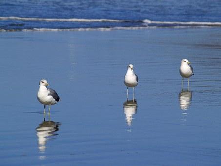 Seagulls 51019 340